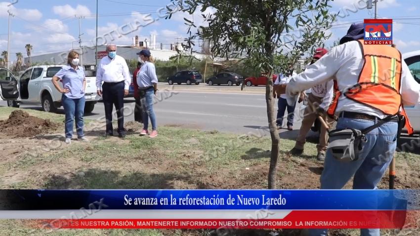 VIDEO Se avanza en la reforestación de Nuevo Laredo
