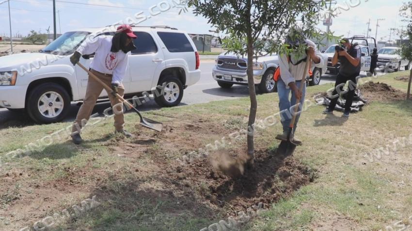 Se avanza en la reforestación de Nuevo Laredo