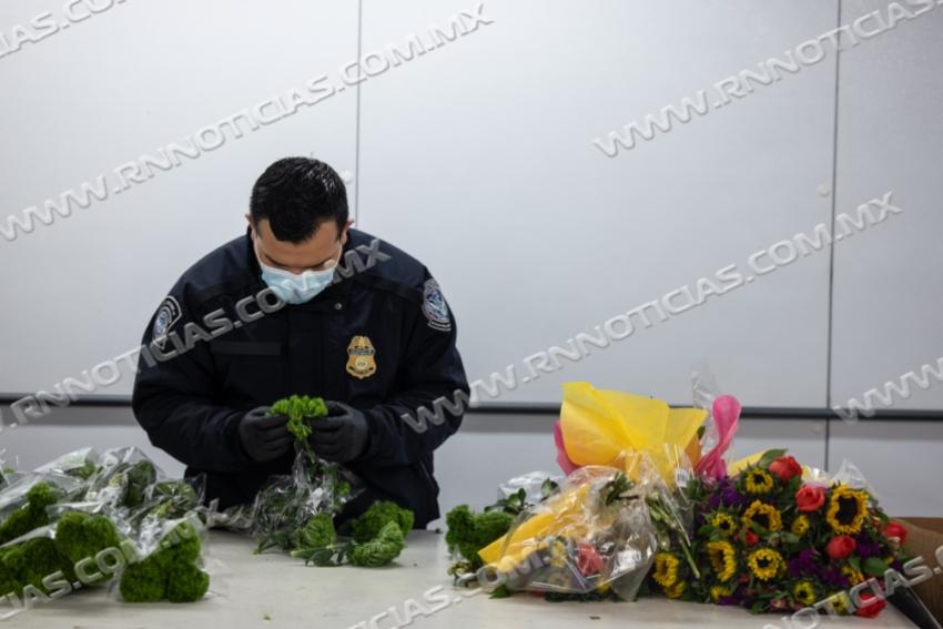 Especialistas en Agricultura de CBP de Brownsville Interceptan Una Plaga Rara en el País en un Cargamento de Flores